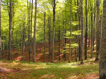 Cansiglio_foresta